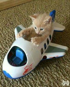 Y dónde está el piloto???