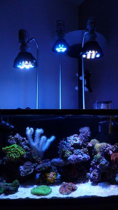 Wow, these look like great lights for a nano tank: Quadspec V2 LED brings much needed color enhancements to PAR LED spotlights