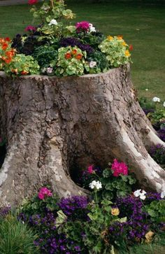 Old Tree Stump Turned Into A Flower Planter Garden Idea DIY
