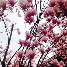 #dossobuono #pink #spring #italy #flowers #fiori #beautiful #amazing #nature