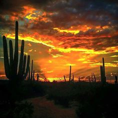 Sunset at Tanque Verde Ranch in Tucson.