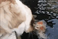 Book the fish, kitty.