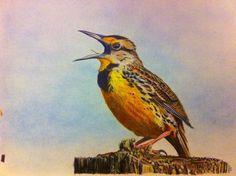 Random Practice Drawing of a Bird