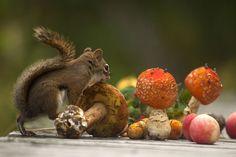 Photo The orange mushrooms by Andre Villeneuve on 500px