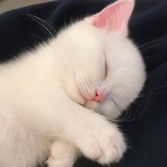 Cute Baby Cats, Cute Little Animals, Cute Cats And Kittens, Cute Funny Animals, Kittens Cutest, Cat Aesthetic, Tier Fotos, Cute Creatures, Pretty Cats