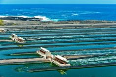 Spirulina Ponds on the Kona Coast