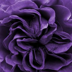 \\ purple flower of a name unknown