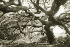 Ancient oak tree on Cumberland Island Cumberland Island, Nature Tree, Weird World, Source Of Inspiration, Wonderful Images, Nature Photos, Travel Usa, Art Photography, Photo Galleries