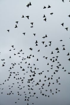 flock by Rob Hernandez, via Flickr