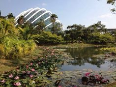 Marina Barrage and Gardens by the Bay #singapore #attractions