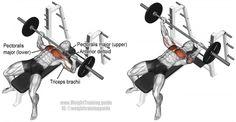 Barbell bench press exercise illustration