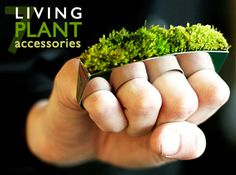 how to make living furniture made with plants | Living Plant Accessories