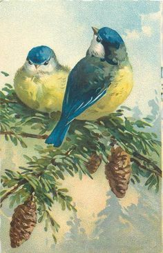 two blue and yellow bluetits, left one looks ahead, right looks up, three pine cones below