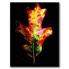 Colorful Autumn Oak Leaf Postcards