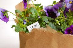 DIY Wedding: Newspaper Wrapped Plants ...centerpieces + favors