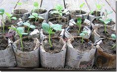 Newspaper starter pots.