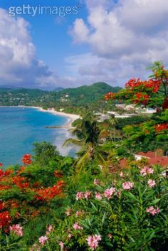 Grenada, Spice Island- smells heavenly, beautiful rain forest and waterfalls
