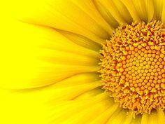 yellow images - Google-haku