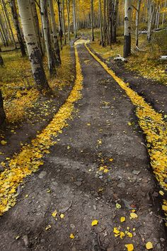 The Golden Road  Uncompahgre National Forest - Colorado  On a very windy october day in the San Juan Mountains, I stumbled upon this amazing little road that had been blown clear of its fallen aspen leaves. The remaining leaves were trapped in the voids of the tire tracks, creating this magical scene.
