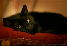 """""""A cat is not, in the long run,  anxious to please. --T O Beachcroft"""