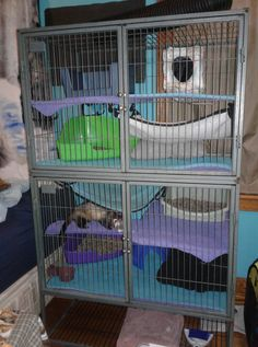 Eloras cage set up Pet Ferret, Cage, Parrot, Home Appliances, Bird, Pets, Animals, Parrot Bird, House Appliances