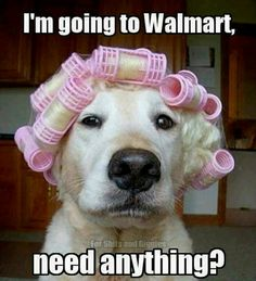 Going to Walmart funny quotes memes quote dogs meme funny quotes humor funny animals<<<This is cute X) Animal Captions, Animal Memes, Funny Animal Humour, Funny Animals With Captions, Funny Cute, Funny Memes, Funny Stuff, Hilarious Sayings, Funny Animal Pictures
