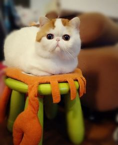50 Cute Pictures Of Snoopy The Cat | Cutest Paw