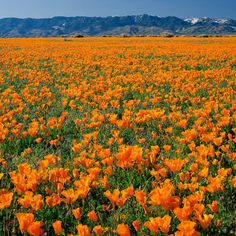 America's best #spring drives range from Maine all the way out to Antelope Valley, #California, pictured here.