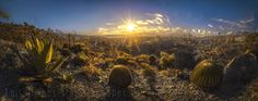 Golden Hour Desert Scene lll  Landscapes photo by LuisLyons http://rarme.com/?F9gZi