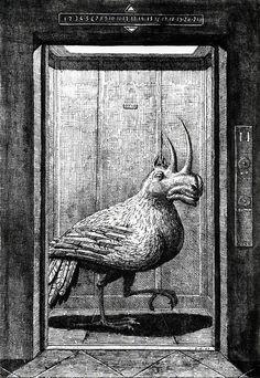 Domenico Gnoli - Modern Bestiary, 1968