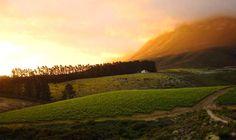 Hermanus Wine Route, South Africa
