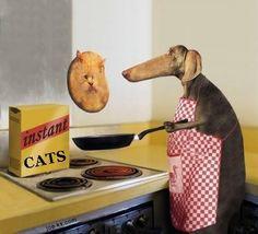 Cooking cats . Pancake Cats
