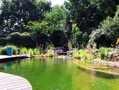 Schwimmteich Typ Design   Manzke Landschaftsplanung Swimming Pool Pond, Natural Swimming Ponds, Natural Pond, Garden Pool, Water Garden, Landscape Plans, Landscape Design, Outdoor Pool, Outdoor Gardens