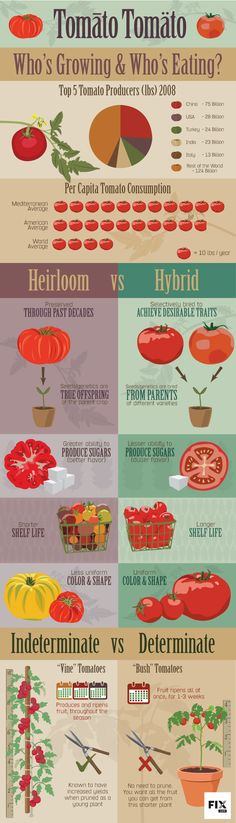 Tomatoes are one of the most popular homegrown crop, and for many good reasons.  The taste surpasses any bland tomato from the grocery store, there are hundreds of unique varieties to choose from and they offer excellent dollar value because they're expensive to buy fresh.  Tomatoes c