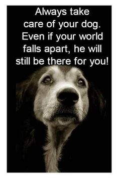 Pet Dogs, Dogs And Puppies, Dog Cat, Doggies, I Love Dogs, Puppy Love, Animals And Pets, Cute Animals, Dog Quotes Love