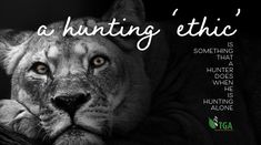 Trophy Hunting, Recorded Books, Screwed Up, Got Him, Hunters, Lions, Wildlife, News, People