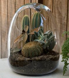 I love terrariums, but I really love the deep toned cactus terrarium. At $200 I think I will try to make it myself.