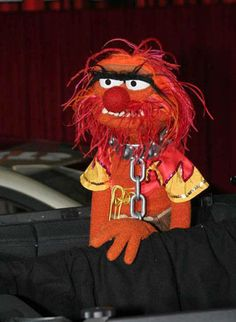 animal chained #muppets
