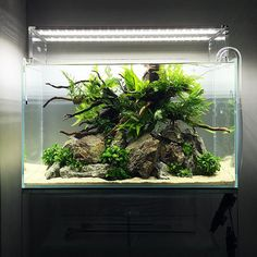 30 Best Ideas Aquarium Designs in The Living Room 31 unique aquarium design