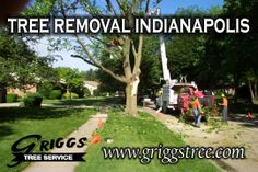 http://www.griggstree.com/tree-removal