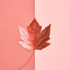 Pantone Color of the Year 2019 is Living Coral. Explore how Living Color will define design trends in home interiors and products Coral Colour Palette, Coral Color, Peach Colors, Coral Pink, Coral Hair, Fall Leaves Background, Peach Background, Peach Aesthetic, Wallpaper Aesthetic