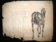 George Stubbs.  Anatomy of the Horse.