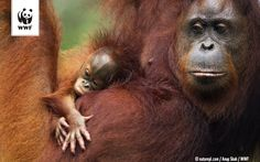 Today is The International Day For Biological #Diversity? Protecting biodiversity is rescuing life on #Earth ! #animals