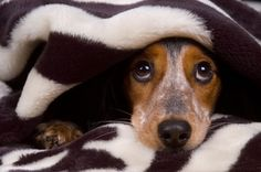 Someone wake me when it's 2013. Cute puppy tucked in by Shutterstock