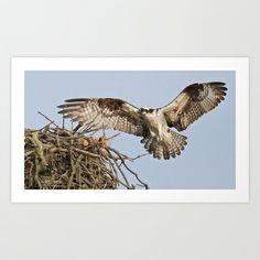 Osprey II Art Print by Ooh! Look! Photography  - $12.48 Art Prints, Photography, Art Impressions, Photograph, Fotografie, Photoshoot, Fotografia
