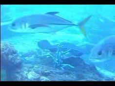 NASSAU - Atlantis Resort This is a short presentation of Atlantis Resort from Nassau, Bahamas. I hope you'll be impresed :)