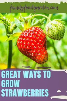 Strawberries are a delicious treat - and unfortunately expensive too. Family Food & Garden shows you several creative ways to grow strawberries. The options include containers, pots, rain gutters, baskets or upside down. For the more ambitious there are vertical gardens, towers or pallet planters. We will show you how to easily increase your strawberry load over time. These tricks will also reduce their exposure to infestation. Learn more… #strawberries #growstrawberries #morestrawberries Growing Strawberries In Containers, Grow Strawberries, Healthy Fruits And Vegetables, Strawberry Planters, Eat Seasonal, Garden Show, Pallet Planters, Family Meals, Yummy Treats