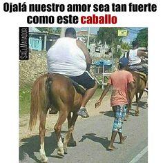 Hay que denunciar esto. No al maltrato animal. #NoAlMaltratoAnimal #Caballo #horse #gordo #gym #gimnasio #ejercicio #SrElMatador #ElSalvador #SrElMatador http://www.srelmatador.com #Foto