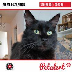 Cette Alerte (206336) est désormais close : elle n'est donc plus visible sur la plate-forme Petalert Suisse. Nous avons retrouvé notre animal Merci pour votre aide. Visible, Aide, Cats, Switzerland, Belgium, Dog, Animaux, Thanks, Shape