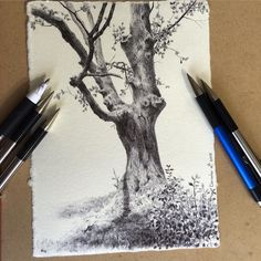 by dinabrodsky --- day 42 out of 126 - ballpoint pen on handmade paper from - this tree was sent my way by the wonderful painter and art writer Charley Parker - check. Landscape Drawing Tutorial, Landscape Drawings, Plant Sketches, Tree Sketches, Tree Drawings Pencil, Ink Pen Drawings, Stylo Art, Ballpoint Pen Art, Stippling Art